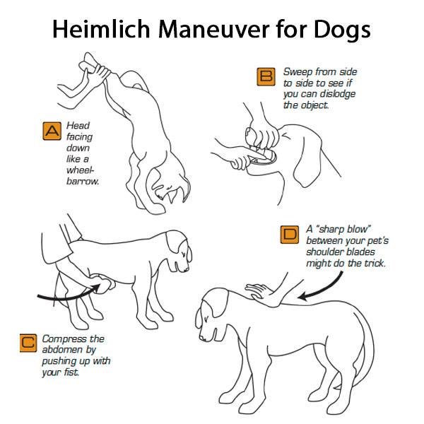 What to do if your Dog is Choking