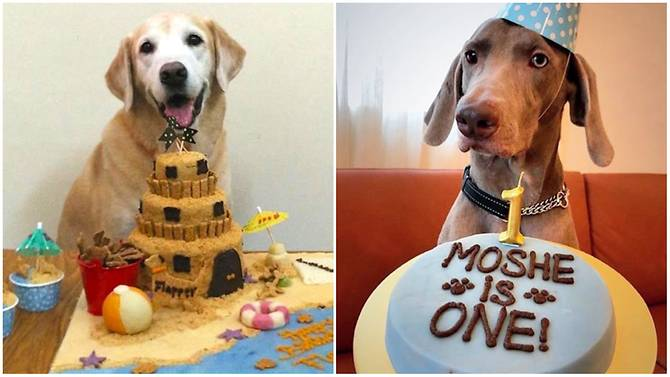 Barkday Cakes For Dogs Are Getting Increasingly Popular And Their Owners Having A Slice Too