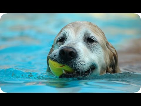 Preventing water intoxication, heat exhaustion in dogs