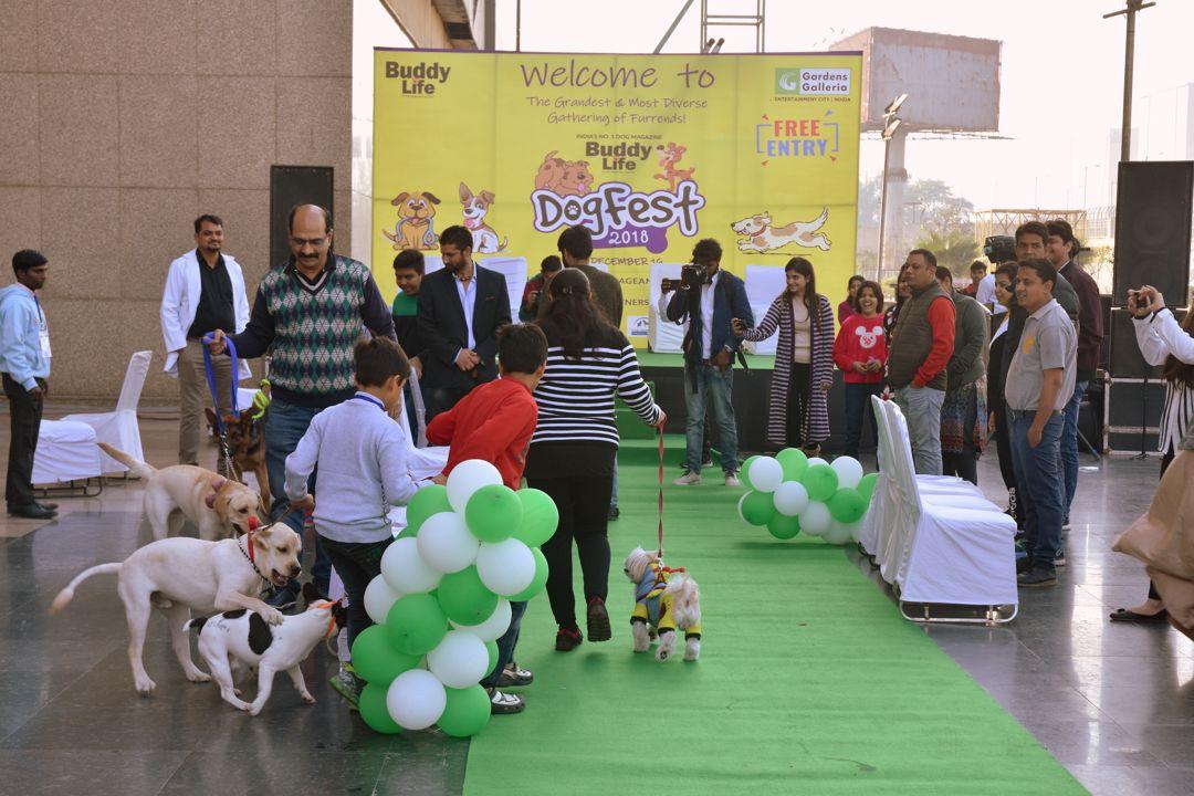 Dog Fest 2018 - 1