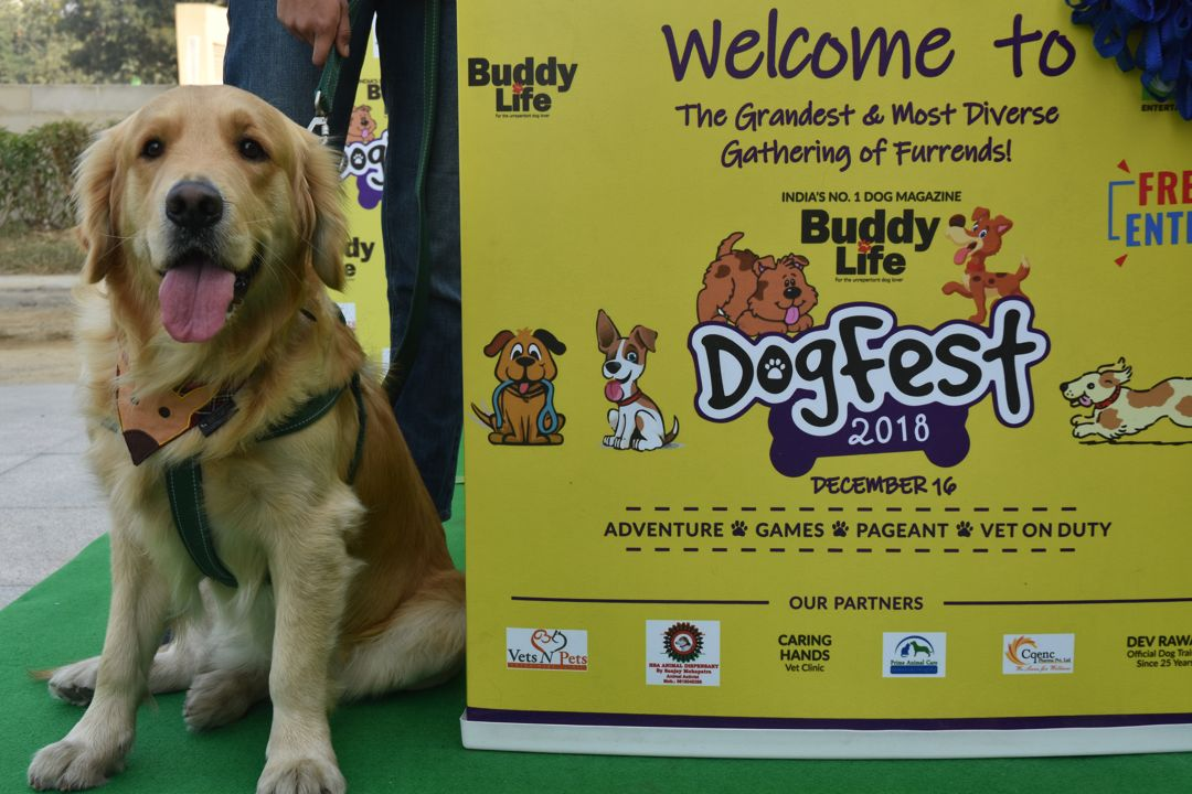 Dog Fest 2018 - 2