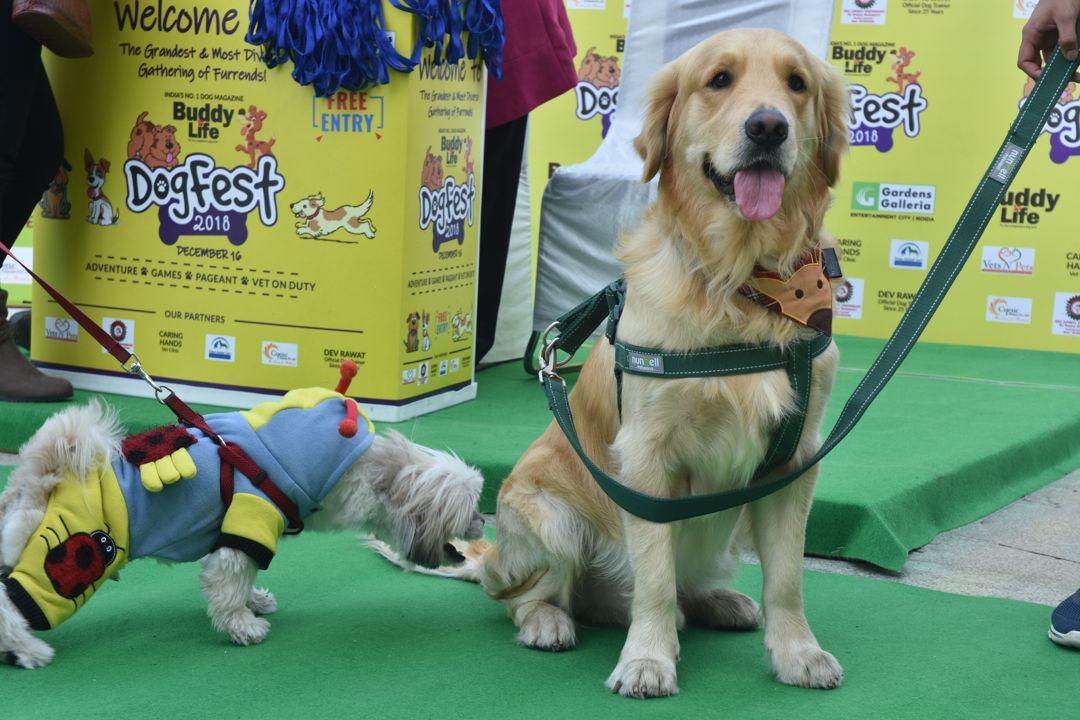 Dog Fest 2018 - 5